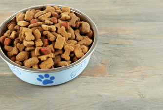 Best Holistic Dog Food in 2021