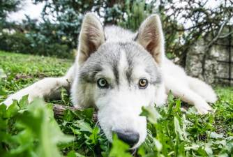 The 7 Best Husky Rescue Organizations in the US