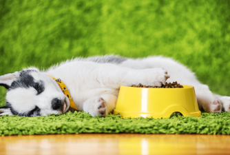How Much to Feed a Puppy - Owner's Guide