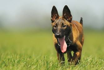 5 Fun Facts About Dog Tongue