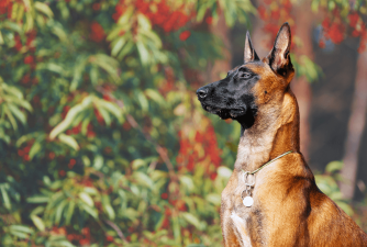The 7 Most Obedient Dog Breeds in the World