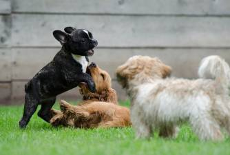 8 Tips And Tricks - Puppy And Dog Socialization