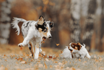 Is Your Puppy Barking Constantly? Here's How to Stop it