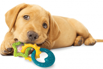 3 Best Chew Toys for Puppies (Review)