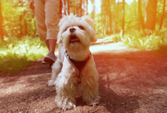 Best Puppy Harness for Your Furry Buddy