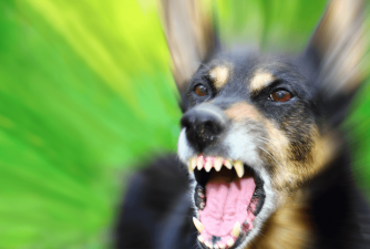 Rabies in Dogs - What Owners Should Look Out For