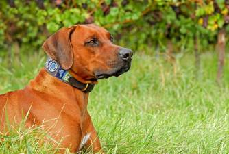 Best Personalized Dog Collars [2021 Review]