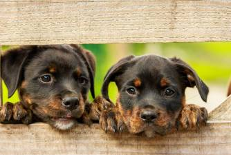 Dog Breeders Recommendation: Best Dewormers for Puppies