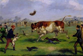 What is Bull-baiting?
