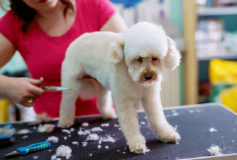 5 Dog Breeds That Require a Lot of Grooming