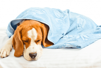 Parvo In Dogs: Vaccination, Symptoms & Treatment