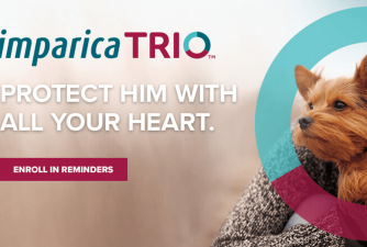 What Owners Should Know About Simparica Trio for Dogs