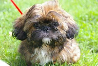 Top 60 List: Small Dog Breeds