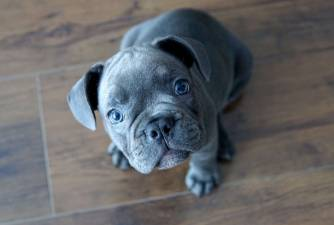 Puppies for Sale - Complete Guide