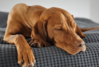 Should You be Worried if Your Dog Sleeps All Day?