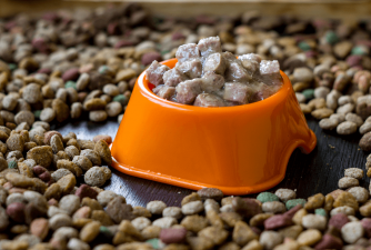 Best Wet Dog Food [2021 Review]