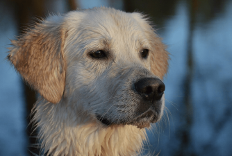 What to Look For in a GPS Dog Collar?