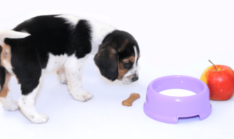 Is Milk Good for Dogs?