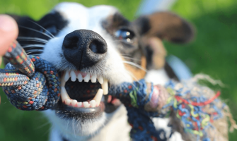What Are Good Toys for Dogs?