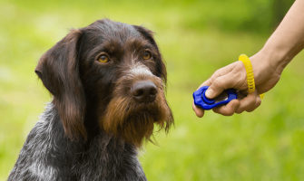 Getting Started With Clicker Training
