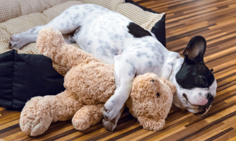Dog Seizures and How to Handle Them