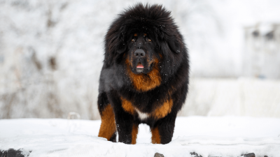 Rare Dog Breeds That Will Make You Stand Out