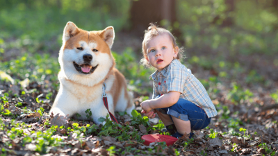 Most Famous Japanese Dog Breeds