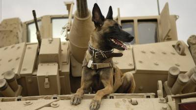 War Dogs Through History