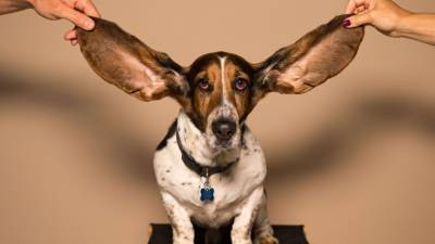 What is BAER Hearing Test?