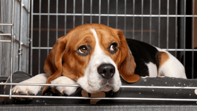 Best Dog Crate Covers in 2021