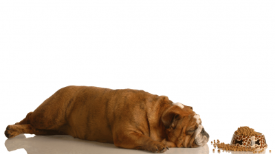Best Low Protein Dog Food in 2021