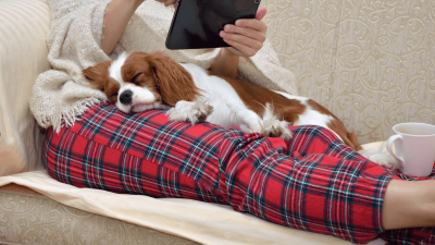 Top 10 Dogs to Choose For Apartment Living