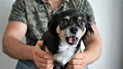What To Do If Your Dog's Choking