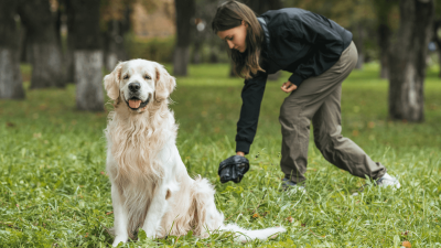 How to Spot Colitis in Dogs?