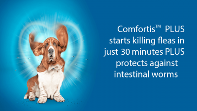 Is Comfortis for Dogs Safe To Use
