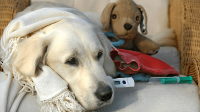 How To Choose the Best Cough Suppressant for Dogs