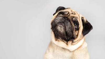 Is it Safe to Use Theophylline for Dogs?