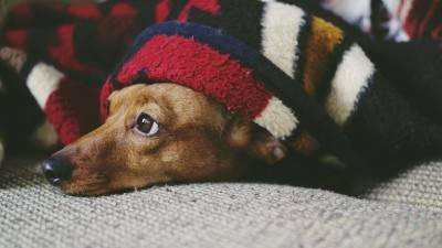List of Dachshund Rescues [2021]