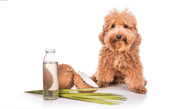 What Is The Best Coconut Oil For Your Dog