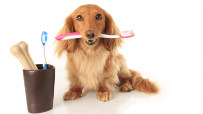 Dog Toothbrush - Most Important Things