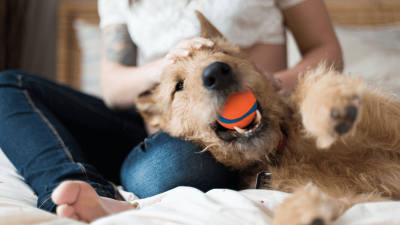 Famotidine For Dogs - Side Effects & Dosage