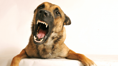 How To Stop A Dog From Barking?