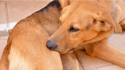 How to Get Rid of Fleas On Dogs in 4 Easy Steps