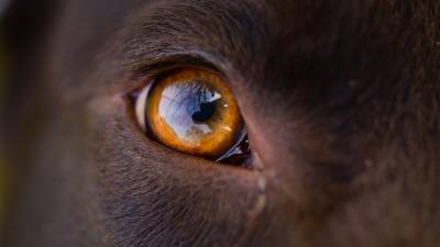 Are Dogs Color Blind? What Is a Myth And What Is True?