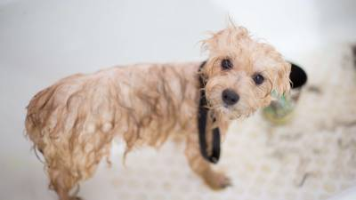 Why Dog Grooming is so Important?