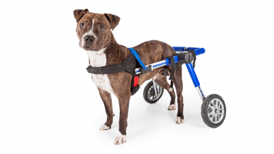 How to Choose The Best Dog Wheelchair?