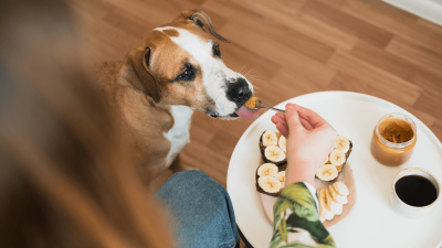 Is Peanut Butter Good for Dogs?