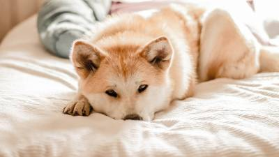 When Is Cefpodoxime for Dogs Prescribed
