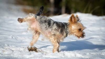 Home Remedies for UTI in Dogs