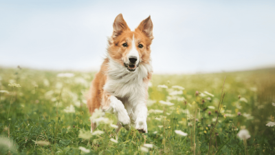 Is Claritin Safe For Dogs?